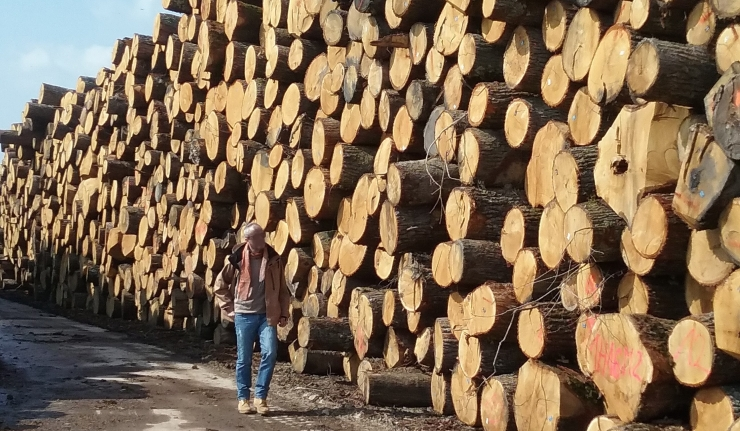 oak-logs-bulgaria.jpg